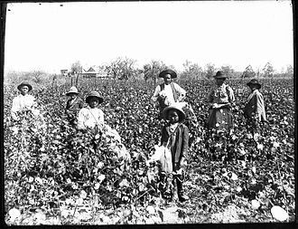 African-American history of agriculture in the United States - Black cotton farming family (c. 1890s).