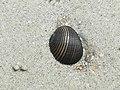 Black shell.!.jpg