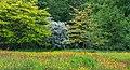 Bloemenweide aan rand van boomwal. Locatie, Natuurterrein De Famberhorst 03.jpg