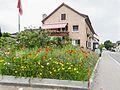 Blumen an der Hauptstrasse in Berg TG (2011).jpg