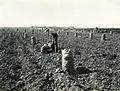 Boise Valley potato harvest.jpg