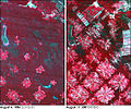 Bolivia satellite deforestation 1986 2001.jpg