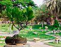 Bonsai Garden, Lalbagh (8654910537).jpg