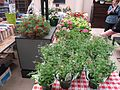 Book and Plant Sale 2009 (3480446958).jpg