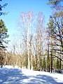 Borskiy r-n, Nizhegorodskaya oblast', Russia - panoramio (22).jpg