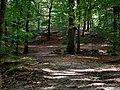 Boslandschap Beekhuizen, Velp.jpg