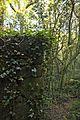 Bosque - Bertamirans - Rio Sar - 019.jpg
