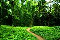 Bosque de La Habana 18.jpg