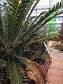 Botanischer Garten Düsseldorf - Südafrika 2.jpg