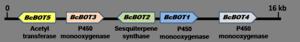 Botrydial - Figure 1. Five open reading frames of the botrydial biosynthetic gene cluster
