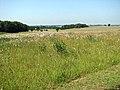 Boudica's Way - view west across wild flower meadow - geograph.org.uk - 1378662.jpg