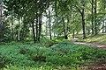 Boulognerskogen1906.jpg