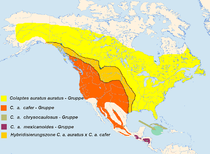 Breeding distributions of the 4 subspecifics of the Northern Flicker.png