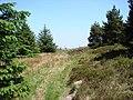 Bridleway through Dyll Faen - geograph.org.uk - 235992.jpg