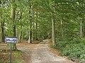 Bridleway through Nott Wood - geograph.org.uk - 595737.jpg