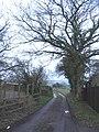 Bridleway to Corsley Church - geograph.org.uk - 343865.jpg