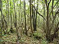 Brigsteer Woods - geograph.org.uk - 1546838.jpg