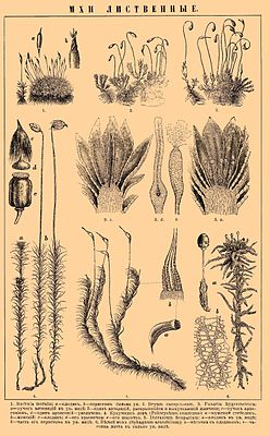 Brockhaus and Efron Encyclopedic Dictionary b39 256-0.jpg