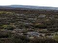 Broomhead Moor - geograph.org.uk - 414238.jpg