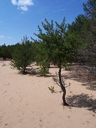 Buckhorn State Park - Image: Buckhorn State Park Sand Dune