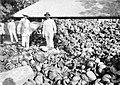 COLLECTIE TROPENMUSEUM Berg kokosnootbolsters bij gevangenis Lubu Pakam aan de Oostkust van Sumatra TMnr 10012612.jpg