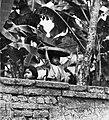 COLLECTIE TROPENMUSEUM Twee kinderen kijken over de muur van een woonerf TMnr 20000011.jpg