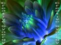 CS-Flower-poster.png