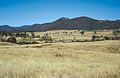 CSIRO ScienceImage 4243 Farmland along Paddys River Road near Canberra ACT.jpg