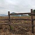Cañaveral en la Huasteca Potosina.jpg