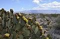 Cactus Vista.jpg