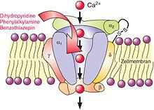el bloqueador de los canales de calcio puede causar prostatitis