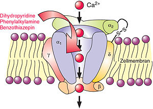 Calcium channel blocker - A calcium channel embedded in a cell membrane.