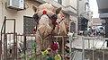 Camel 20180816175536 10.jpg