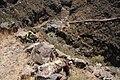 Camino Real. Leñas Blancas - panoramio (1).jpg