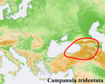 Campanula distribution map Campanula tridentata.png