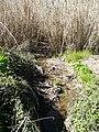 Camps vora el torrent del Sant Crist - P1180214.jpg
