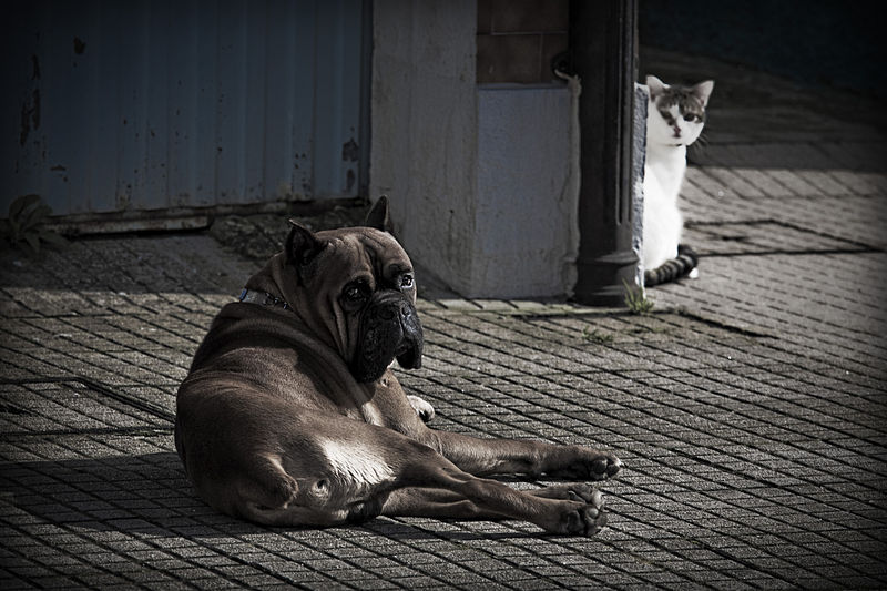 File:Can e gato, Santiago de Compostela.jpg