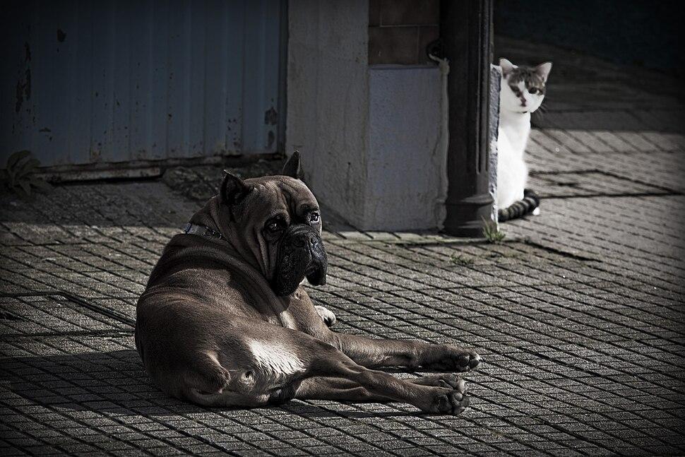Can e gato, Santiago de Compostela