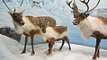 Canadian Museum of Nature, McLeod St, Ottawa (492056) (9447784243).jpg