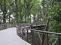 Canopy walk Atlanta.jpg
