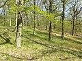 Carex praecox sl36.jpg