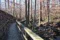 Cascade Springs Nature Preserve boardwalk, Atlanta, Dec 2018 2.jpg