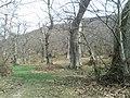 Castagneto a Tirli - panoramio.jpg