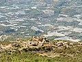 Castillo de Bernia 2.JPG