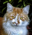 Cat (8227339983).jpg