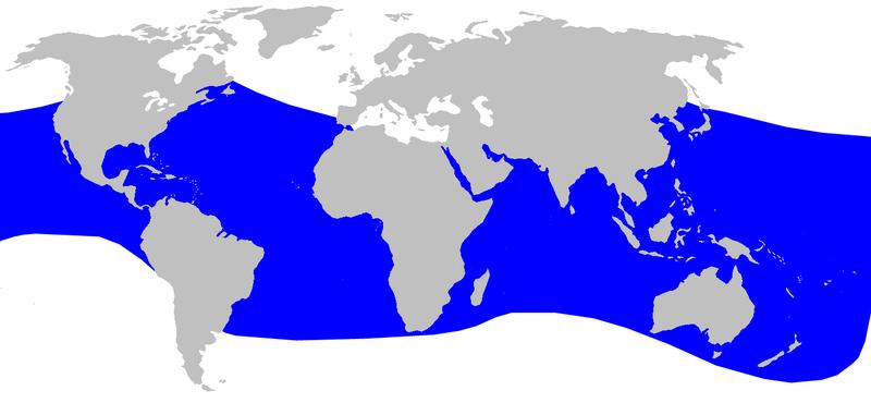 File:Cetacea range map Blainvilles Beaked Whale.png