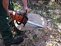 Chainsaw.arp.750pix.jpg