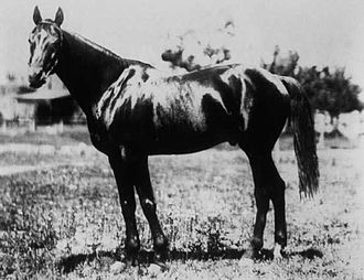 Chant (horse) - Image: Chant 1894