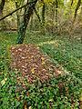 Chenstochov ------- Jewish Cemetery of Czestochowa ------- 113.JPG