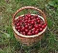 Cherries in basket 2018 G1.jpg